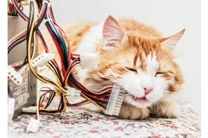 Pets and Cables: Protect Your Furry Friends